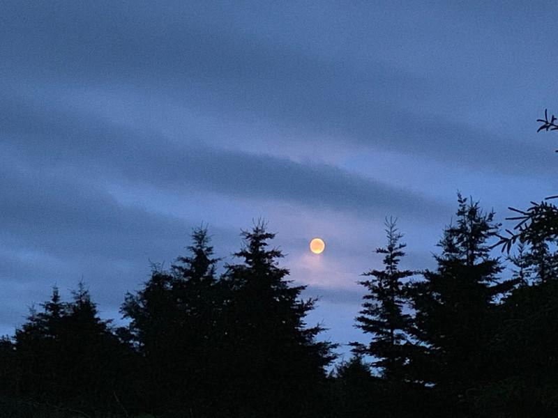 26. Nature  at nightime.jpeg