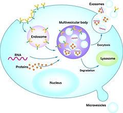 exosome 2.jpg