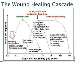 RG Healing.PNG