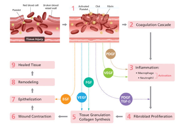 PRP, PRP Injection, PRP Therapy, Platelet Rich Plasma