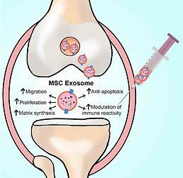 Exosome.jpg