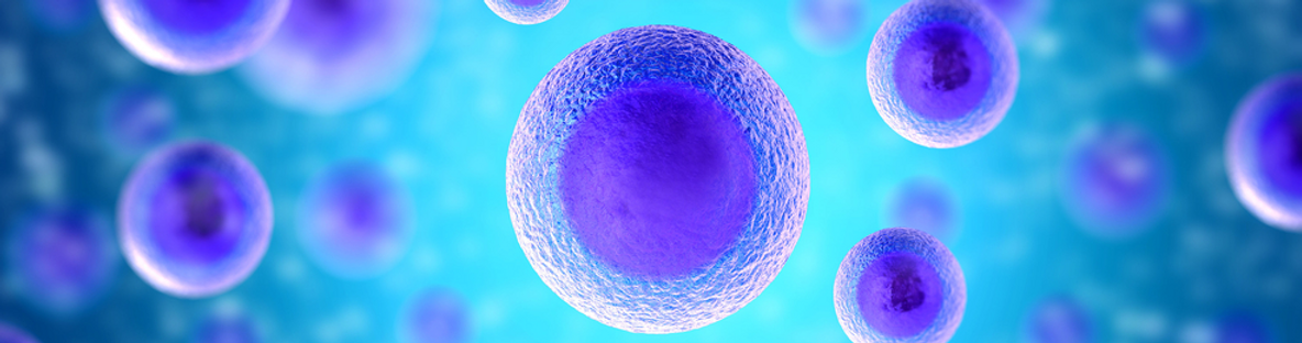 stem_cells_banner_1.png