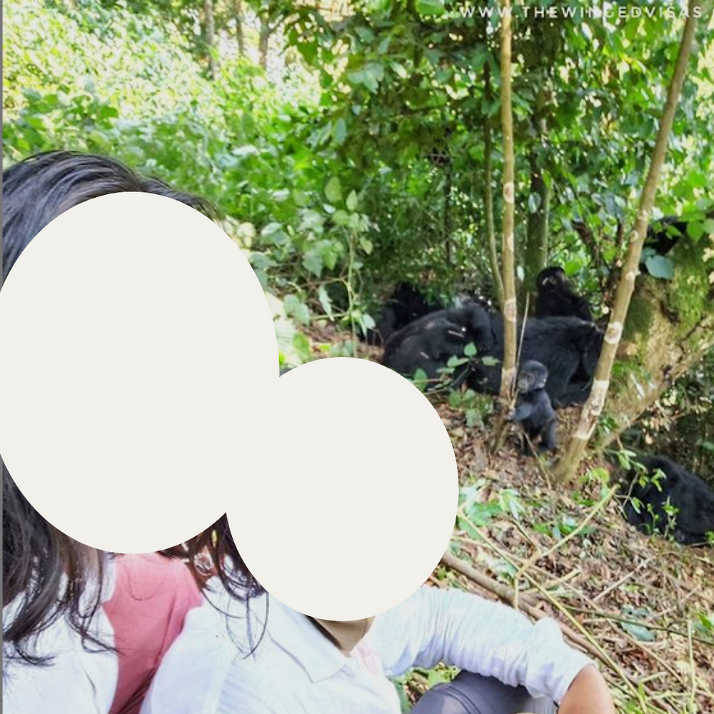 In the foreground, two people with their faces covered by large white circles (to protect identity). They are in a Ugandan rainforest. In the background are a troop of gorillas sitting under a small patch of trees.