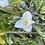 Thumbnail: Camellia Wirlinga Bride