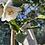 Thumbnail: Camellia White Baby Bear
