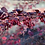 Thumbnail: Berberis thunbergii Atropurpurea PICK UP ONLY