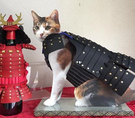 Cães e gatos vestindo trajes típicos dos samurais japoneses