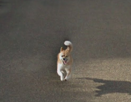O mundo se apaixonou pelo cachorro japonês que perseguiu o carro do Google Street View
