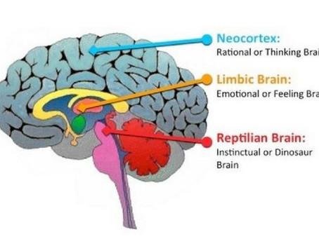 Ons brein tijdens communicatie