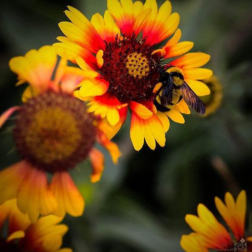 Bumble Bee Gerber