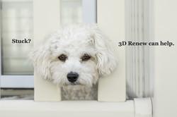 dog-2579897_1920_edited
