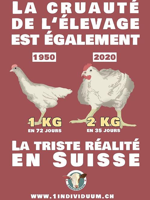 Get Active! - Paquet 300 Poulles