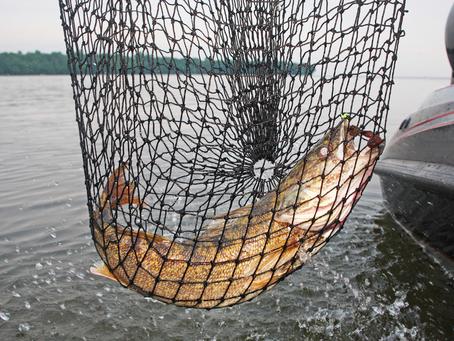 Walleye Update