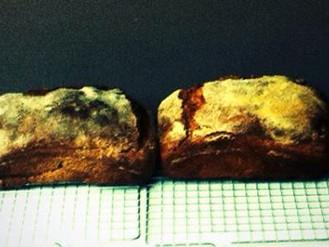 Wholegrain Spelt Bread Recipe