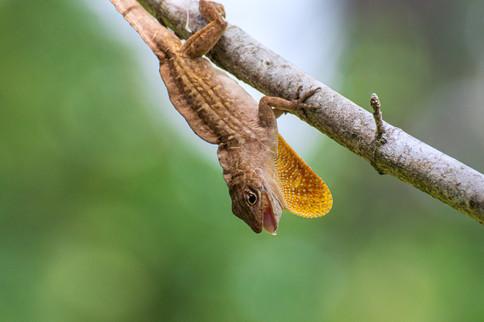 LizardMouth.jpg
