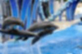 Sea World.jpg