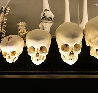 Skeletons-2.jpg