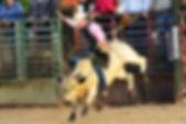 bull-riding-rodeo.jpg