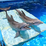 clearwater-marine-aquarium.jpg