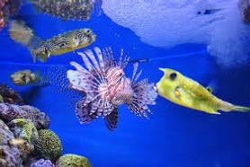 New England Aquarium.jpeg