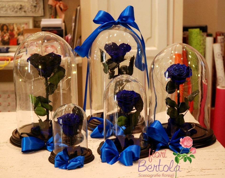Rosa incantata blu