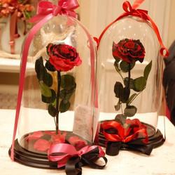 Rose incantate