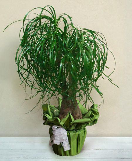 Piante Green da interno (€15/120)