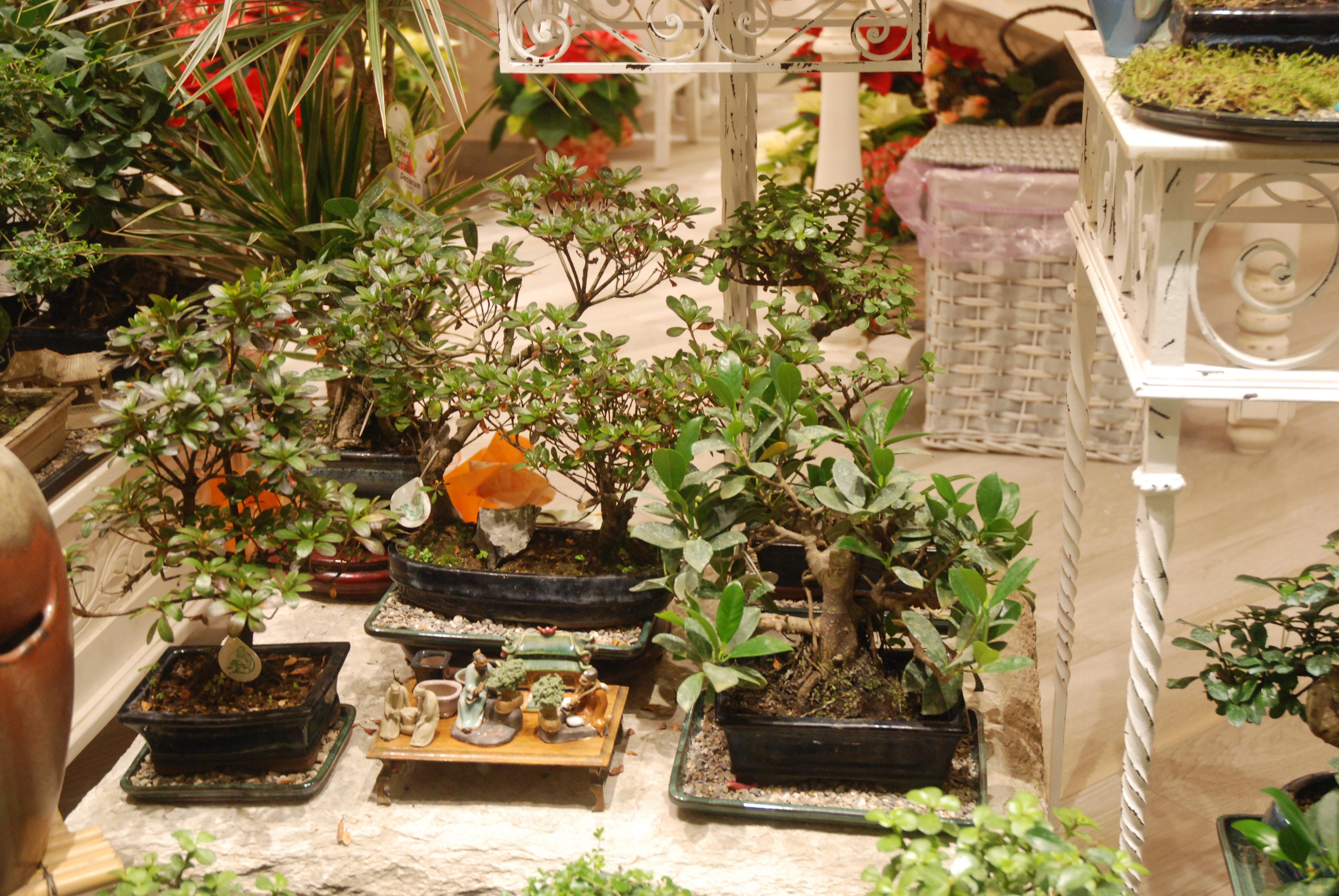 Area Bonsai da interno