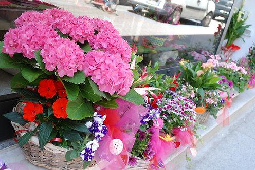 Mix di piante da esterno (€30/120)