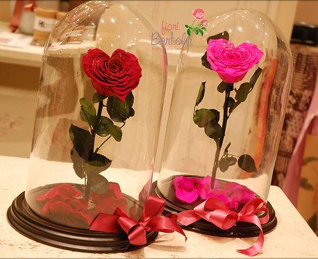 rosa incantata cuore