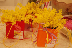 borsine piccole mimosa