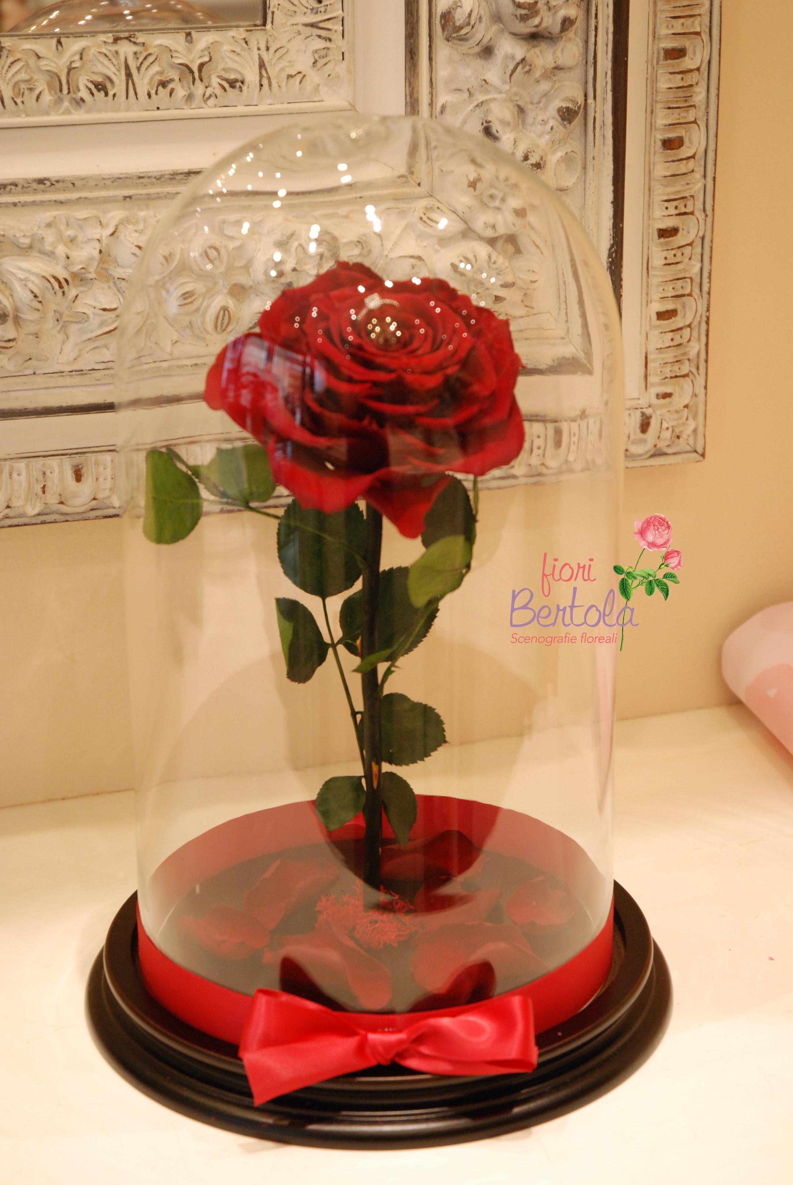 Rosa San Valentino