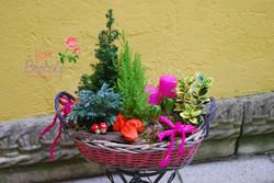 Composizione di piante per Cimitero