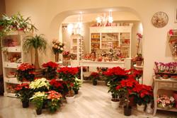 Interno negozio Natale