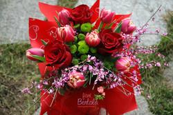 Rose rosse Mortara