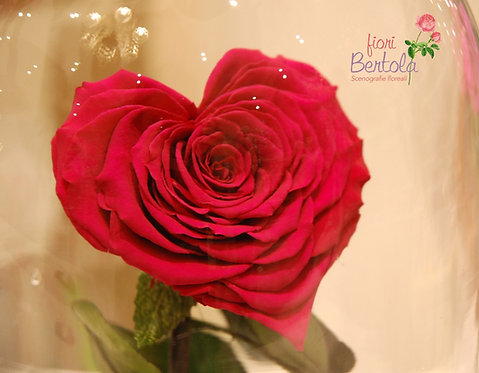 rosa san valentino cuore