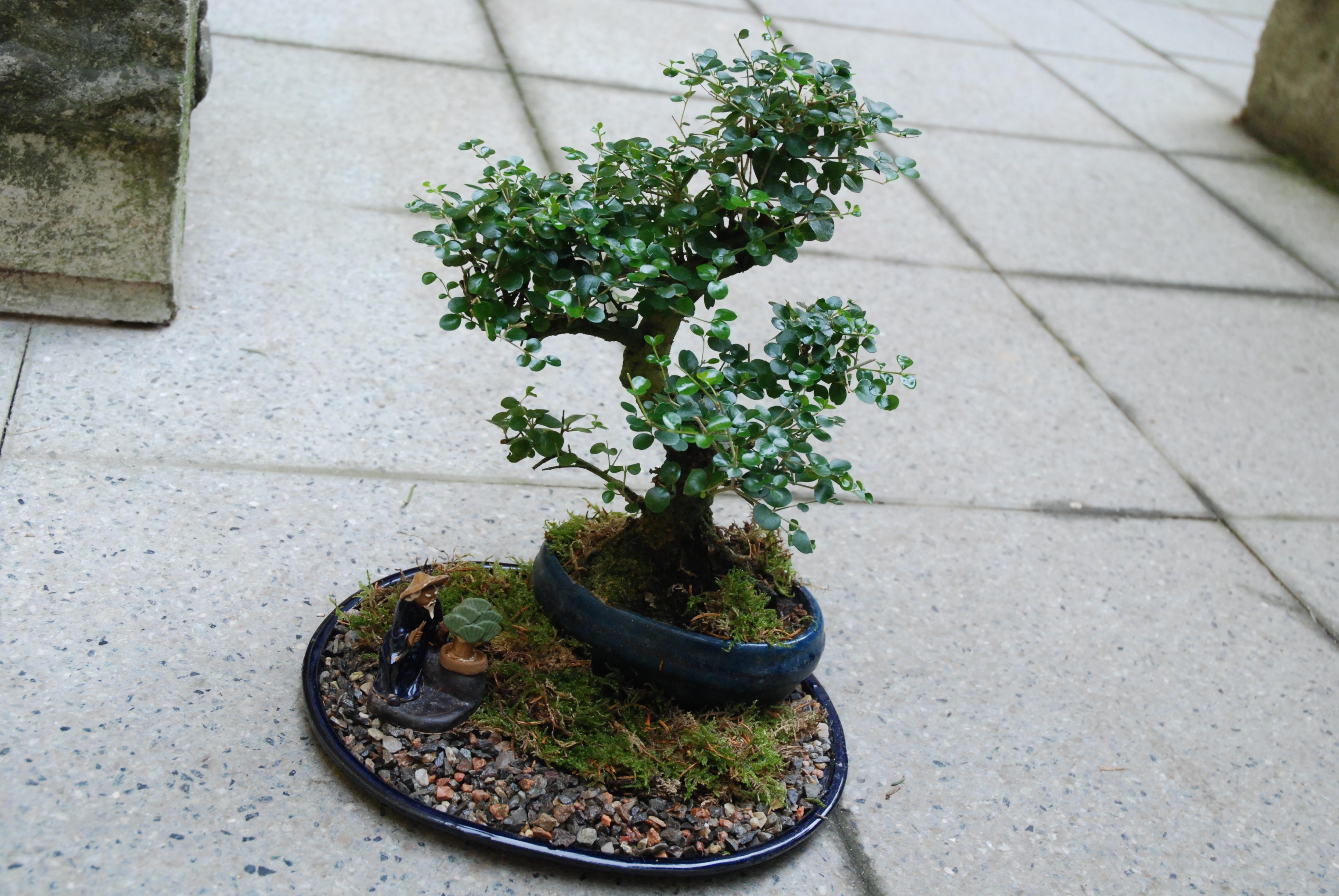 Bonsai paesaggio