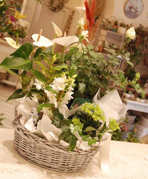 Piante fiorite da interno (€15/120)