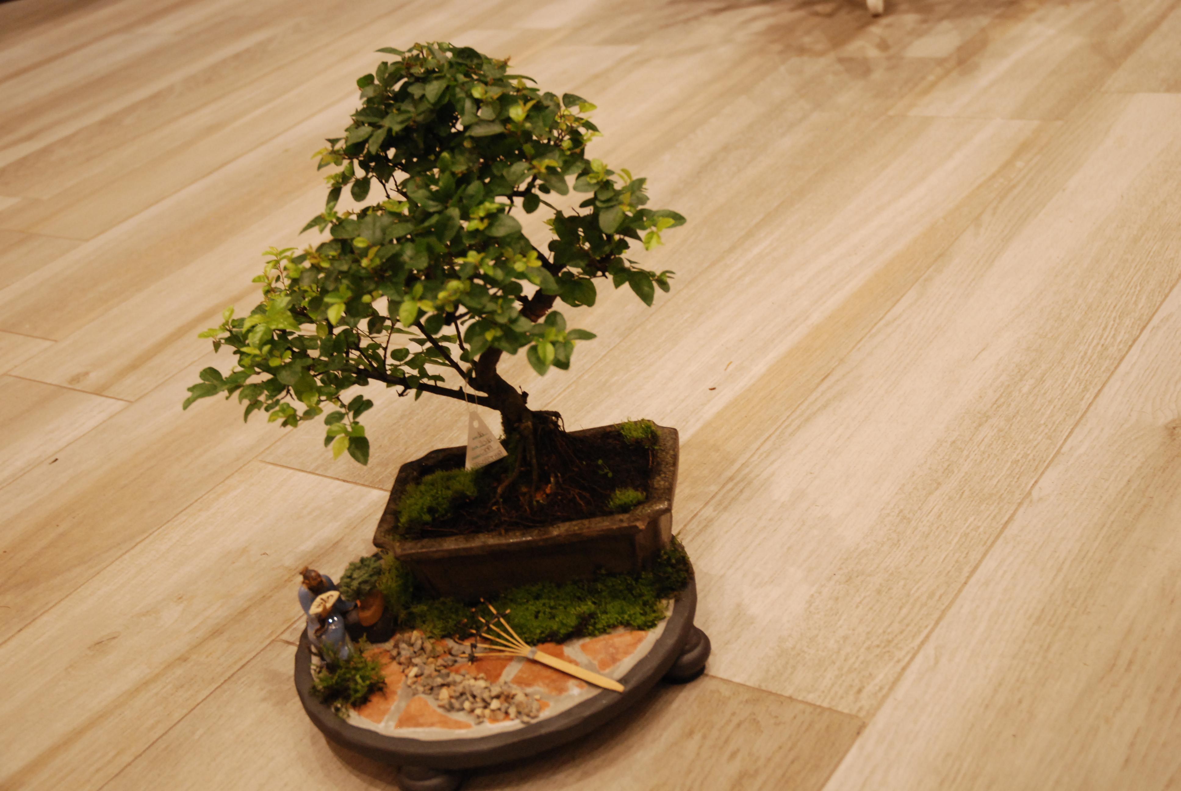 Paesaggio Bonsai
