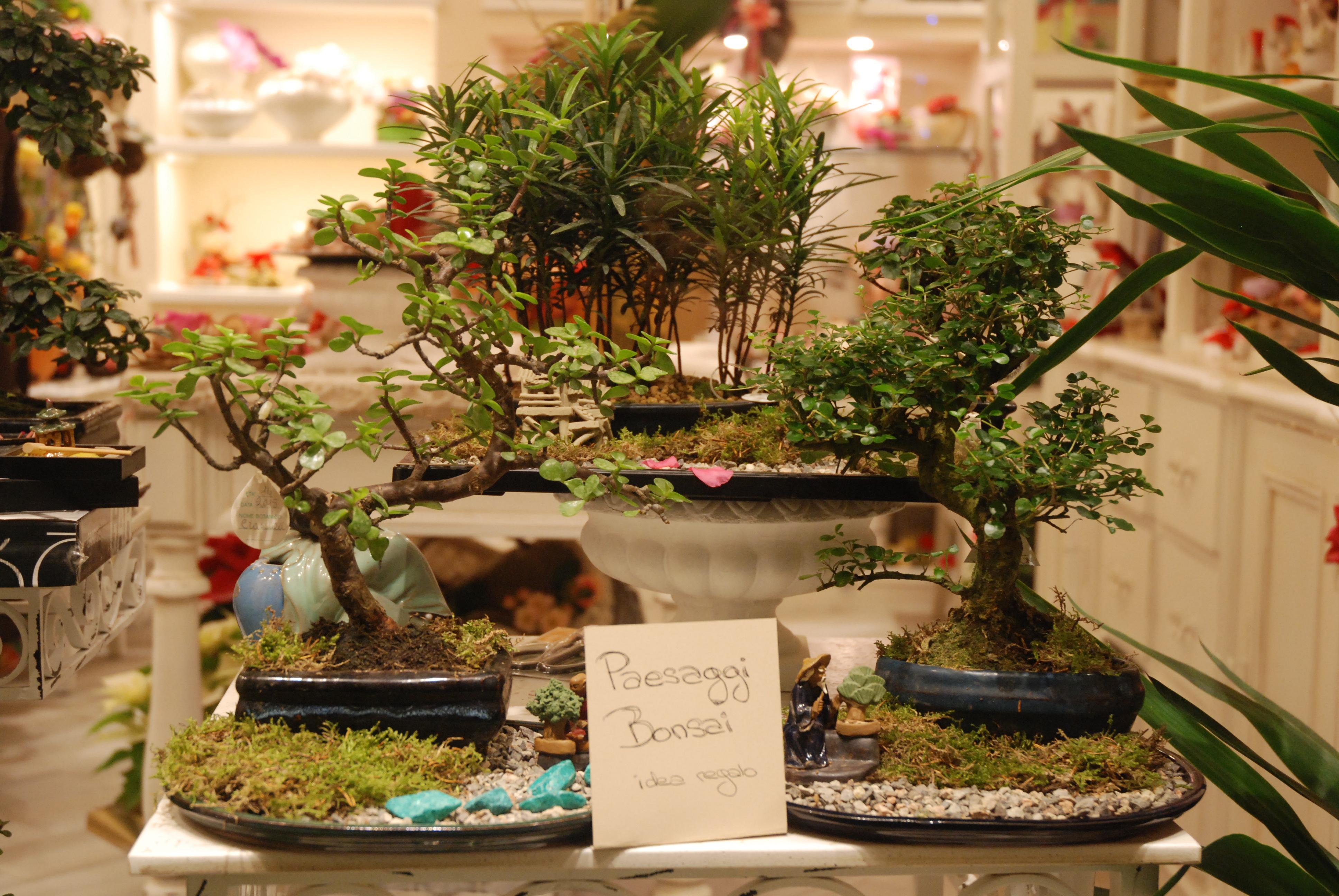 Paesaggi Bonsai