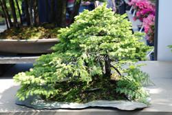 Mostra bonsai Mortara