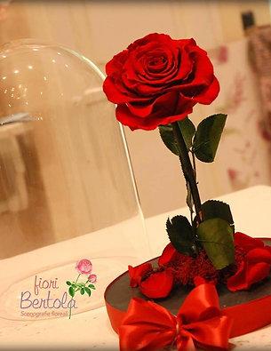 Rosa Incantata grande