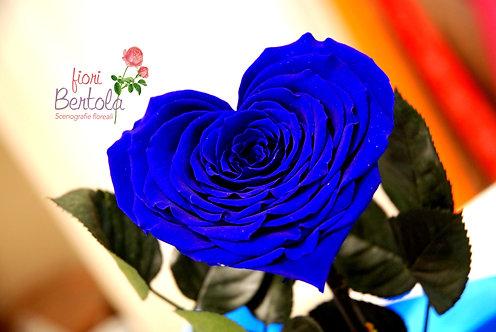 Love Rose media