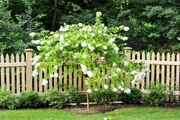 Indresano Landscaping Tree