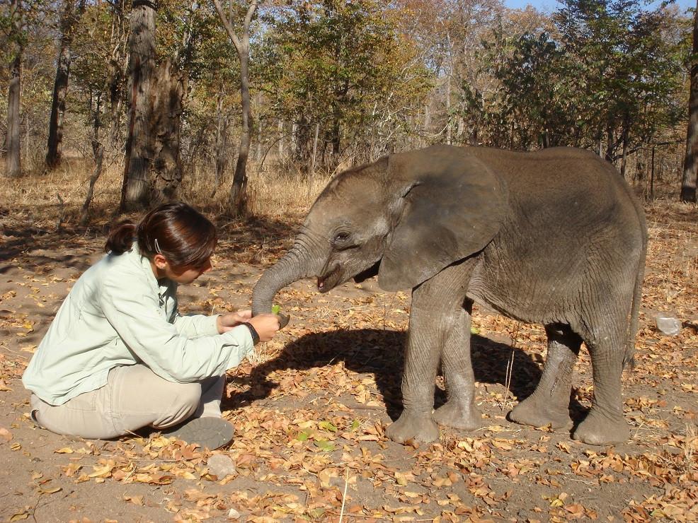 voluntariado en Zimbabwe