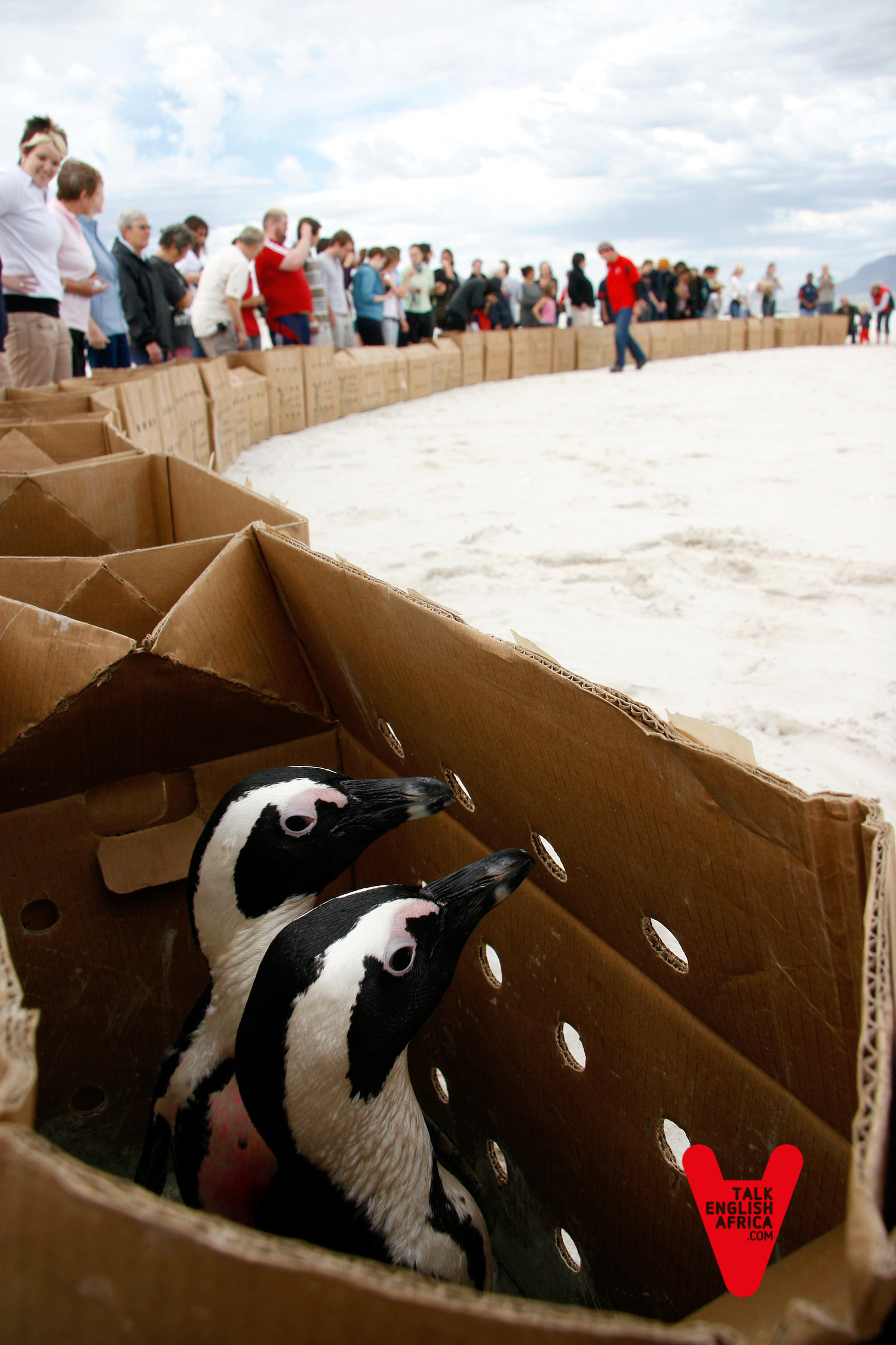 Rescate de pingüinos y aves marinas