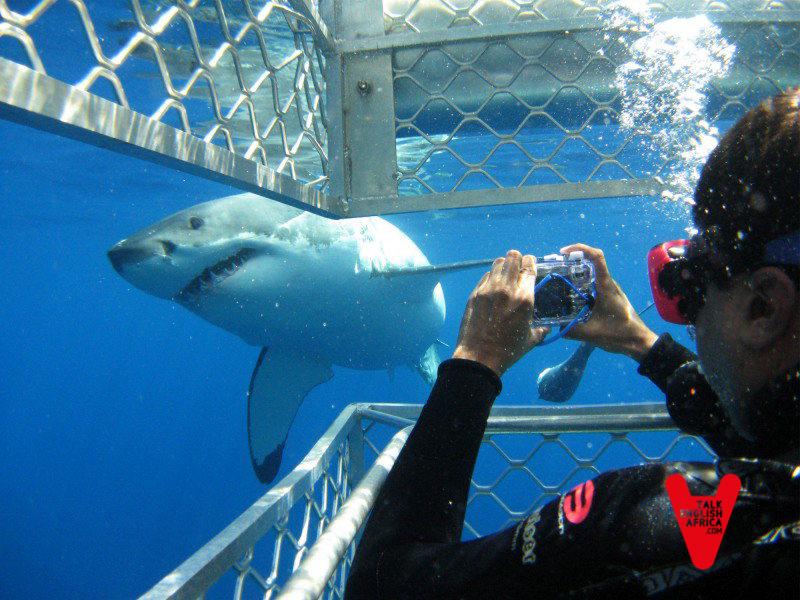 Salvar_al_tiburón_blanco_29