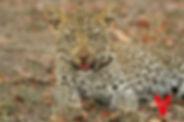 Voluntariado con animales salvajes en África