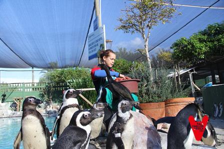 Pingüinos_Cape_Town_15