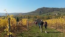 Vigne - Monte San Pietro.jpg